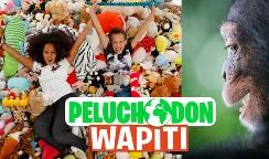 peluchodon wapiti grand singe